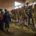 Participation à la traite des vaches